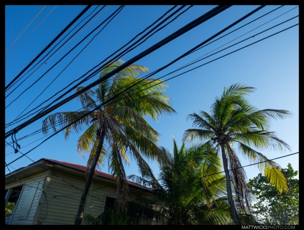 Palm trees and power lines.  A METAPHOR PERHAPS?  I DON'T KNOW.